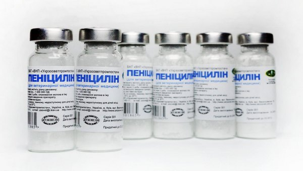 penicillin a type of antibiotic The type of bacteria involved bacteria are divided into two types depending on their external structure: gram-positive bacteria which has thick, waxy external layer gram-negative bacteria which has an extra fatty layer that acts as a barrier against certain antibiotics.